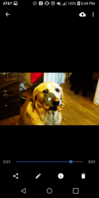 Dog Gif Converted to Video