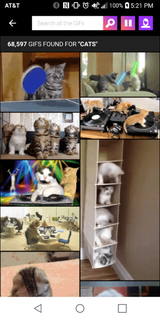 Searching for Cats on Giphy